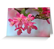 FLOWERING CRABAPPLE BLOSSOMS Greeting Card