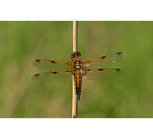 Beautiful Wings Photographic Print