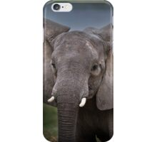Elephant in Lower Zambezi iPhone Case/Skin