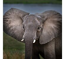 Elephant in Lower Zambezi Photographic Print