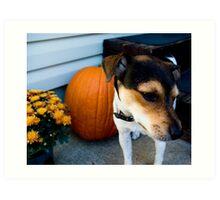 jack/rat terrier Art Print