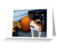 jack/rat terrier Greeting Card