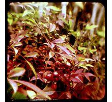 Ttv: Fresh Berries Photographic Print