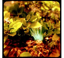 Ttv: Well Hello There Photographic Print
