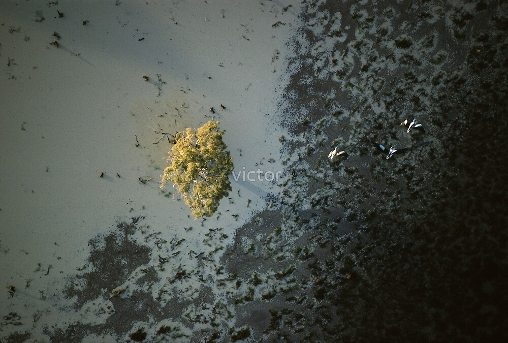 wetland by victor