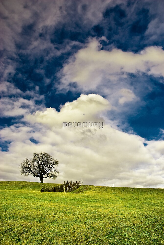 Lonely tree by peterwey