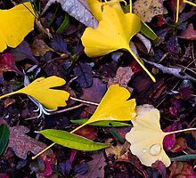 Colors of Fall 1 by David Chappell
