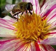 BeeGlee by Charlotte Harold