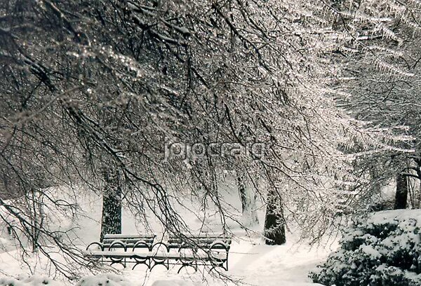 Benches in Central Park by jojocraig