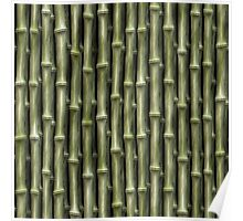 Green Bamboo Nature Pattern (lge) Poster