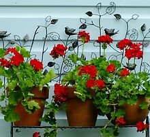 Big Red Geranium by Gabrielle  Lees
