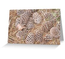 Pine-cone Christmas. Greeting Card