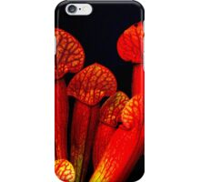 Carnivorous Pitcher Plant - Sarracenia Species iPhone Case/Skin