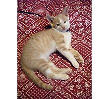 Wild Bill Hickock Kitten says he KNOWS He is cute Photographic Print
