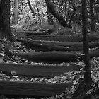Mt. Pisgah Steps by Chipper