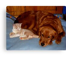 Wild Bill Hickock Kitten and Penelope sharing the doggie bed Canvas Print