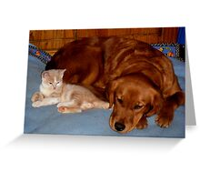 Wild Bill Hickock Kitten and Penelope sharing the doggie bed Greeting Card