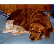 Wild Bill Hickock Kitten and Penelope sharing the doggie bed Photographic Print