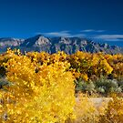 Fall in the Bosque by doorfrontphotos