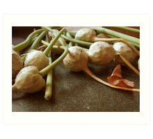 Garlic Flowers Pre-Bloom Art Print