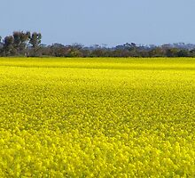 Golden Fields by Luc85
