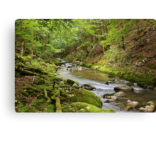 Valserine river under the green woods of Haut Jura Natural Park Canvas Print