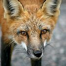 The Look by Vickie Emms