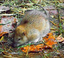 Oh Rats! by ChereeCheree