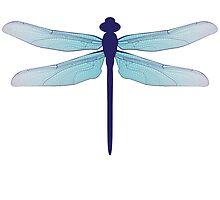 dragonfly by MartaOlgaKlara