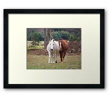 Who says Old Arabian cant gain Weight Framed Print