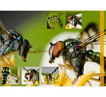 Flying insect Photographic Print