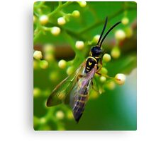 Paper Wasp Canvas Print