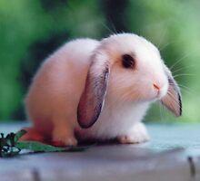 Baby Bunny by clizzio
