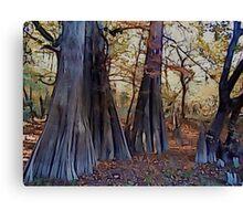 Old Cypress Canvas Print