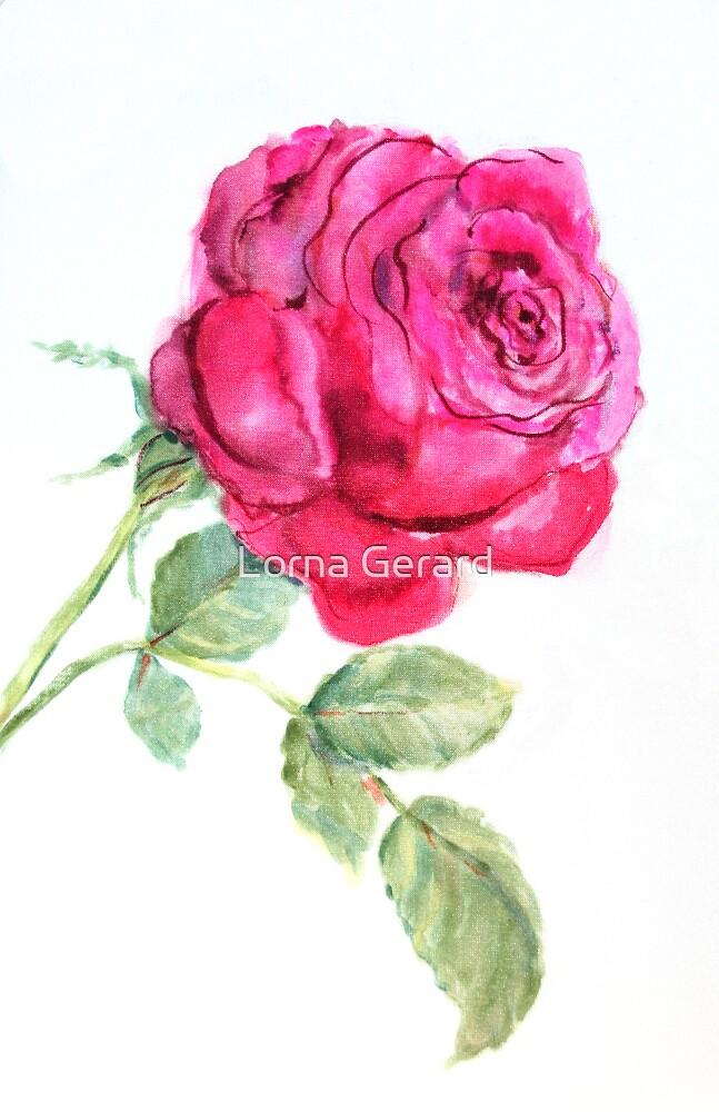 Single Rose by Lorna Gerard