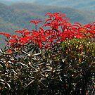 Bush, Blue Ridge Parkway, North Carolina by fauselr
