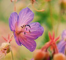 Violet  Fleurs  by fixtape