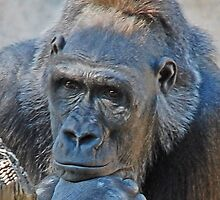 The Thinker by mwfoster