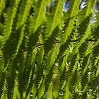 New Fern by Michael Eyssens