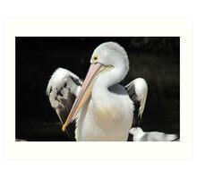 Pelican VI Art Print