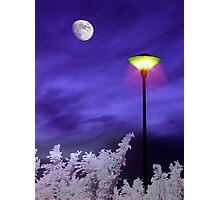 Night Companion Photographic Print