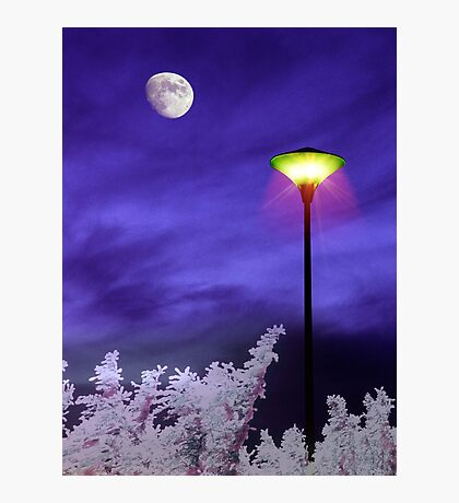 Night Companion Photographic Print