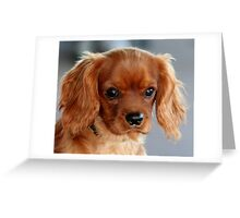A Ruby Cavalier Puppy Greeting Card