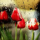 *Spring Rain* by Darlene Lankford Honeycutt