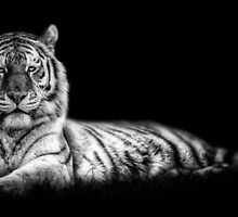 Scar and Stripes by Brian Dukes