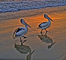 Pelican Reflections - Balmoral Beach - The HDR Series by Philip Johnson