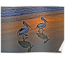Pelican Reflections - Balmoral Beach - The HDR Series Poster
