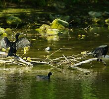 Two Shags on a Stick by Biggzie
