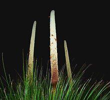 grasstree at night + snails by Fraser Linden