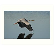 Wings Over Water Art Print